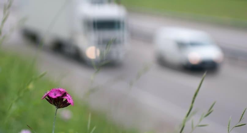 Ulica, zanieczyszczenia i przyroda KNOxOUT farby antysmogowe