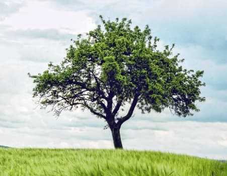 Przykładowa prezentacja farby antysmogowej KNOxOUT prezentująca drzewo na polanie